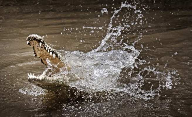 Latest on Western Cape crocodiles that escaped – Number of missing Nile crocodiles unknown